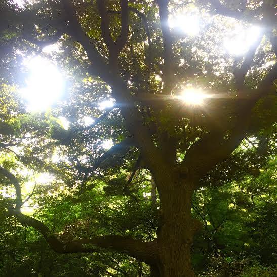 木と木は会話をしているらしいです