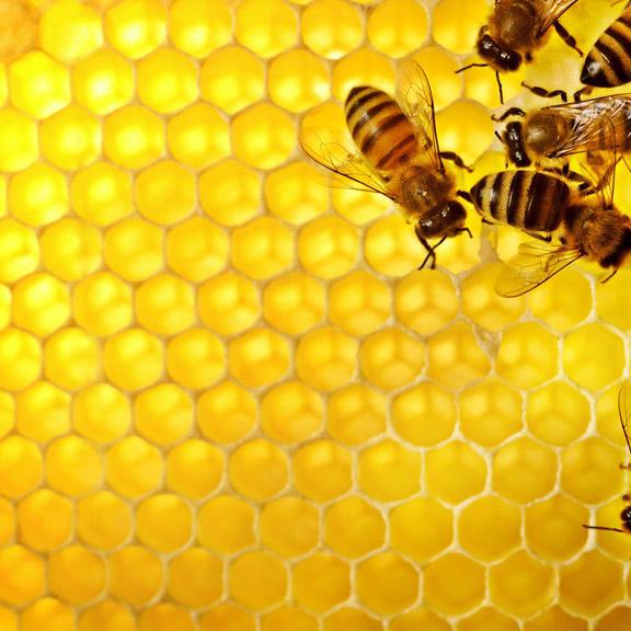 本物の蜂の巣