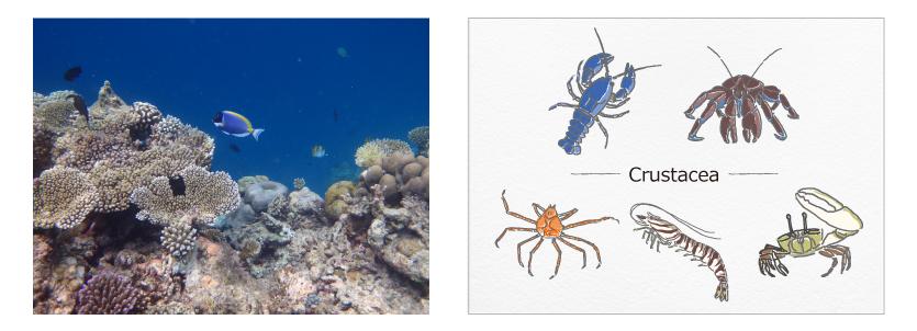 セーラー ボトルインク キングダムノート別注 日本の生物シリーズ「甲殻類」